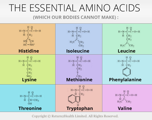 amino acid therapy for weight loss the essential amino acids rate fitness 17260